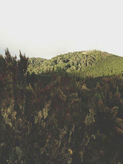 Clense Your Thoughts Nature Mountain View Hikingadventures Mt.kilimanjaro