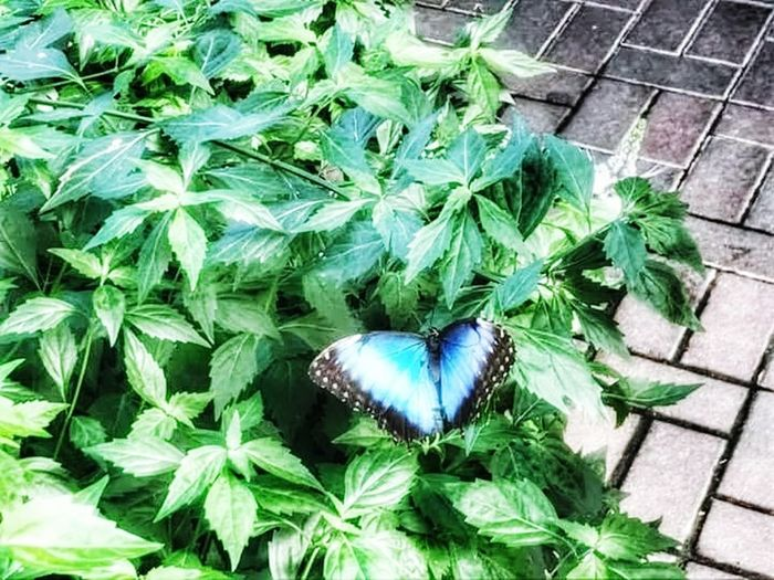 High Angle View Outdoors Leaf Plant Growth Day Green Color No People Nature Fragility Close-up butterfly