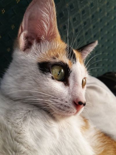 Brenda the cat