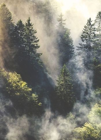 Forest Fog Photography Nature