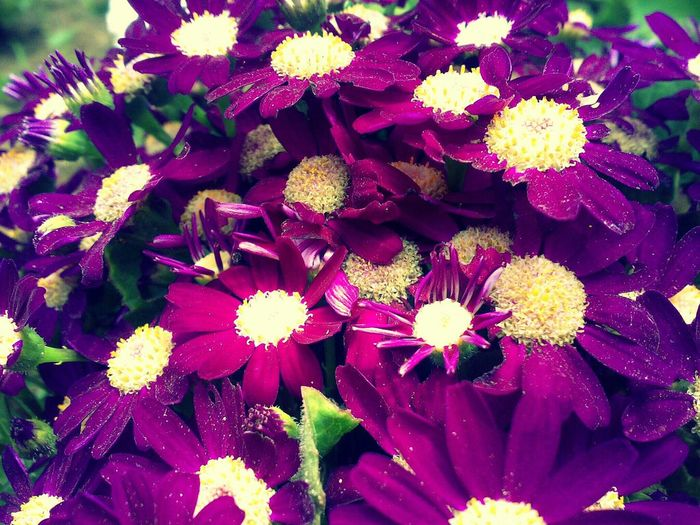 FlowersAu