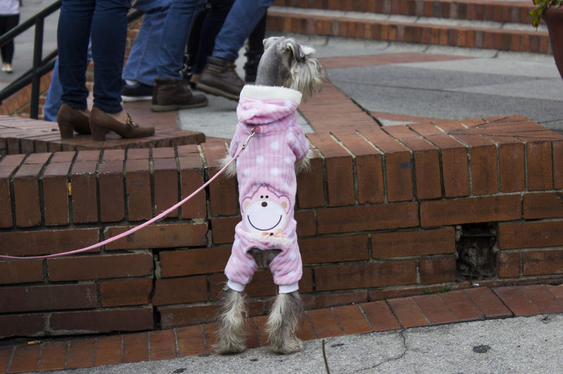 Rear View Of Dog With Funny Clothing