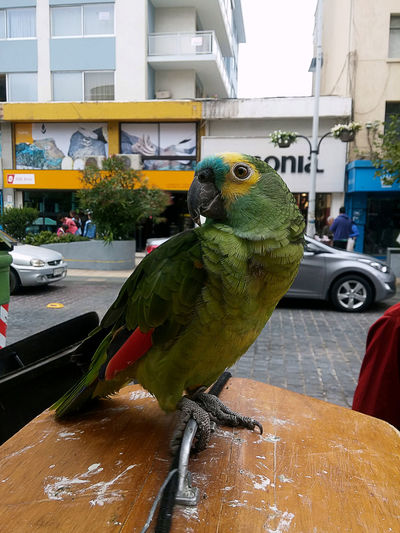 Animal Themes Animals In The Wild Bird Day Occupation Parrot Wildlife