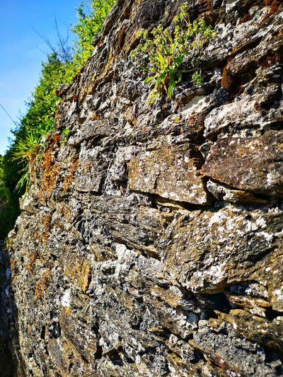 gold wall rocks
