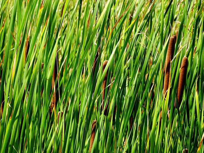 Green Color Full Frame Nature Grass Growth Beauty In Nature Fragility Frond Freshness Plant EyeEm Best Shots EyeEm Gallery EyeEm Masterclass Been There.