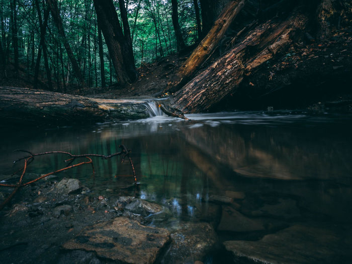 Beauty In Nature Day Forest Lake Nature No People Outdoors Reflection Scenics Tranquil Scene Tranquility Tree Tree Trunk Water