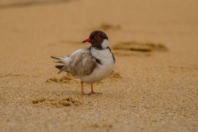 Close-up of bird perching at beach