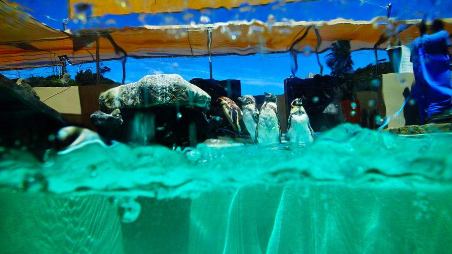 2016 2016 EyeEm Awards Aquarium Beauty In Nature Blue Close-up Dp0q Dp0quattro Japan Outdoors P00taria Penguin Penguins Pool Shimoda Shizuoka Sigma Summer Summertime Water