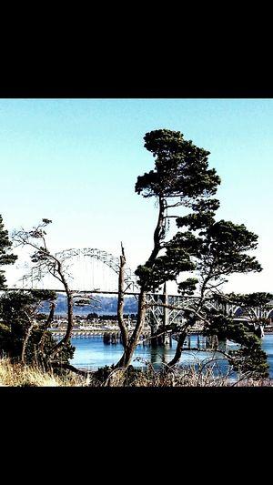 Newport Oregon. View of the bay bridge. My Scenery My Photo Album ♡