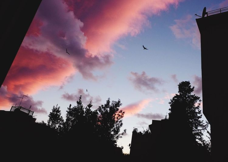 over the sunset Sky Bird Cloud - Sky Flying Sunset Nature Outdoors No People