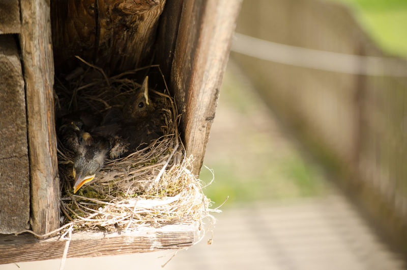 Animal Themes Animal Wildlife Animals In The Wild Bird Bird Nest Close-up Day Focus On Foreground Nature No People One Animal Outdoors Perching Wood - Material