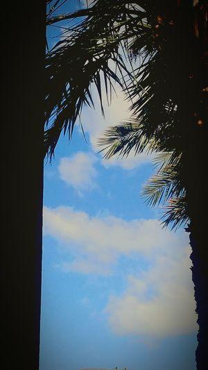 Camana Bay Dart Blue Blue Sky Taking Photos Nature Nice Views Enjoying Life