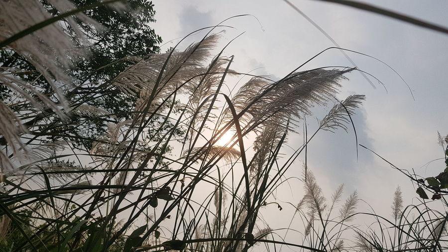 秋天 Bird Branch