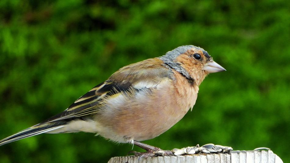 Robin Bird Animal Wildlife Rouge Gorge One Animal Animal Themes Full Length No People Close-up Outdoors Perching Beauty In Nature Animals In The Wild Loire-atlantique Bretagne France🇫🇷