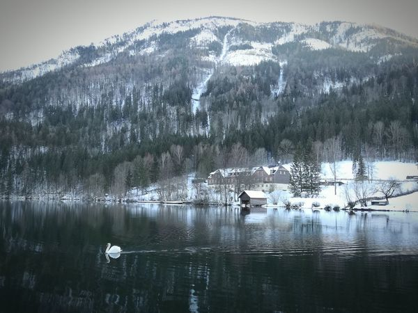 Goose Lunzersee Lakeview Austria TravelAustria Mytravelgram Charming Place Reflections In The Water Snowcapped Mountain Reflection Lake Water Nature Beauty In Nature Scenics No People Animals In The Wild Animal Themes Landscape