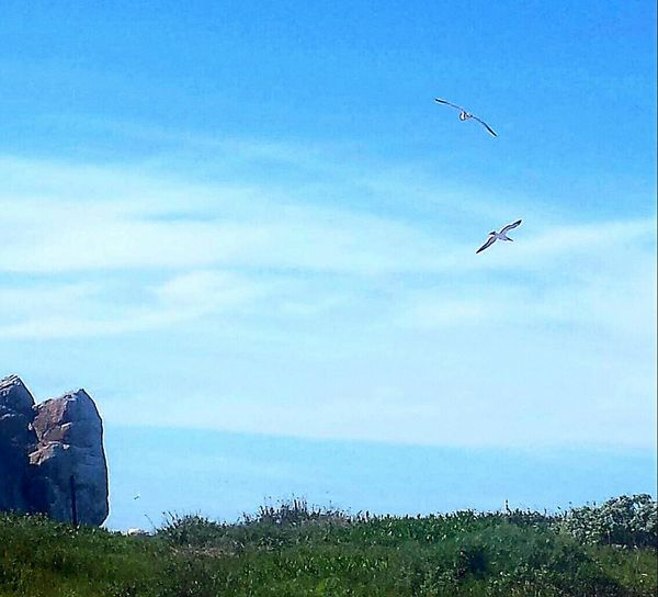 The Great Outdoors - 2016 EyeEm Awards Free Birds Freedom Flight Morro Bay California Birds Flying Two Love Birds Nature Soaring Birds Animals In Action Sunshinr Sunny Day Ocean View Off Of A Cliff Springtime Westcoast Scenery