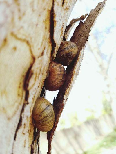 Escaping the daytime heat Tree Tree Trunk Snail Snails🐌 Snail Photography EyeEm Best Shots EyeEm Nature Lover Eye4photography  EyeEm Gallery EyeEmBestPics The Secret Spaces
