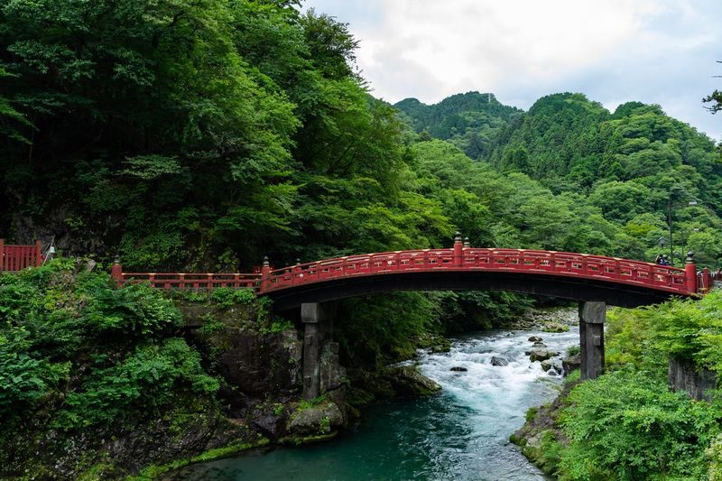 Tree Plant Bridge Connection Bridge - Man Made Structure Water Built Structure Nature River Architecture Growth Green Color Day Footbridge Foliage No People Beauty In Nature Transportation Outdoors Sky