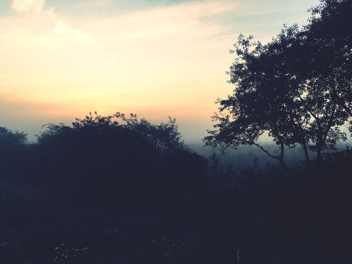 Tree Nature Sunset Tranquility Tranquil Scene Beauty In Nature Sky Scenics Silhouette No People Growth Landscape Outdoors Day Foggy Morning Justbeforesunrise