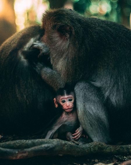 Portrait of young monkey sitting outdoors
