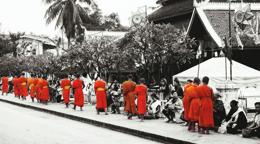 Buddhist Monks Queuing for Rice for Breakfast - Luang Prabang, Laos.