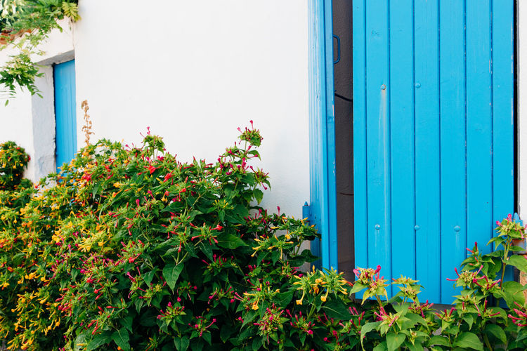 Flower Window Box Corrugated Iron Multi Colored Residential Building House Leaf Architecture Building Exterior Built Structure Closed Shutter Latch Door Locked Ivy Whitewashed Creeper Closed Door Lock Creeper Plant