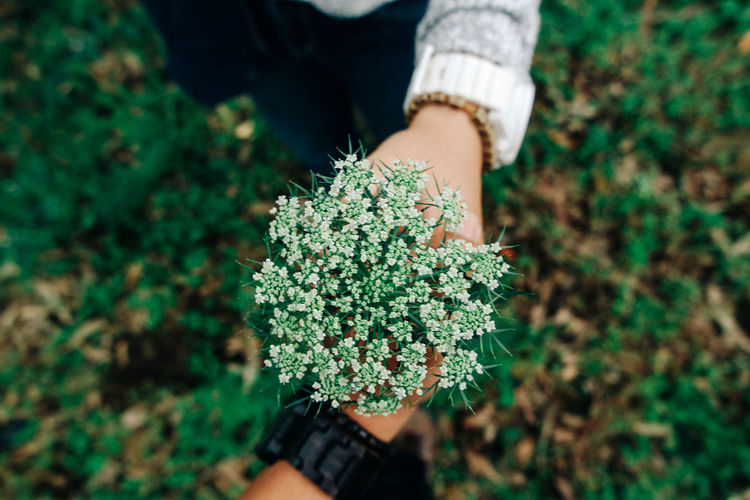 Carrot flower Plant Holding One Person Human Hand Growth Hand Real People Nature Human Body Part Green Color Freshness High Angle View Women Lifestyles Flower Field Outdoors Gardening Day Land Moms & Dads