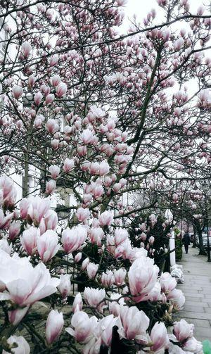 Flowers EyeEm EyEmNewHere LONDON❤ Spirng Nature Streetphotography Running Rosé Tree Great Britain EyeEmNewHere