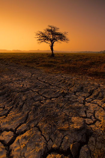 Dramatic sky at sunrise with lonely tree on drought land. Alone Dramatic Sky Drought Global Warming Arid Climate Bare Tree Beauty In Nature Day Dry Field Grass Land Landscape Nature No People Outdoors Rural Scene Scenics Silhouette Sky Sunrise Sunset Tranquility Tree Tree Trunk