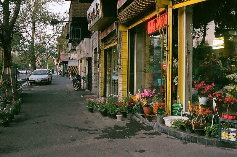 City Landscape 35mm Film City Shop Urban Architecture Flower Flowering Plant