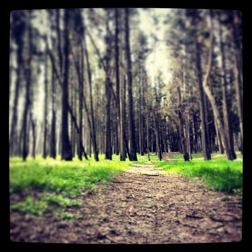 Nature Green Orman Doğa nefesforest