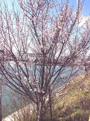 Tree Branch Beauty In Nature Nature No People Low Angle View Outdoors Freshness Scenics Sky Springtime Blossom Flower Growth