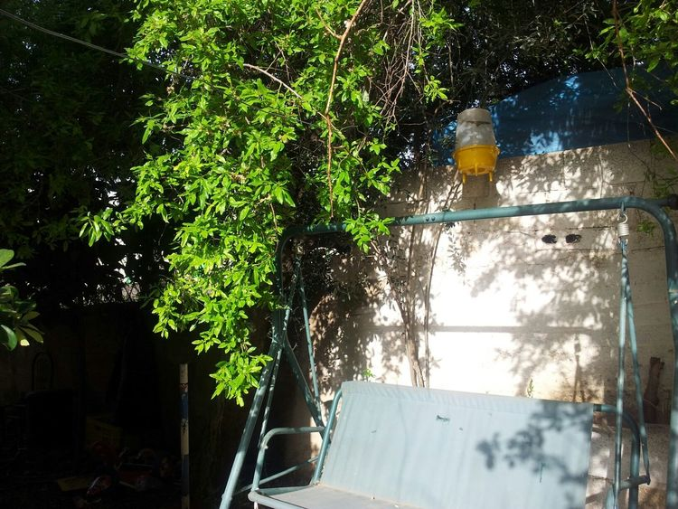 Photography Photo Jarusalem Free Palestine ما اجمل همسات الصباح في الربيع الاخضر 💜