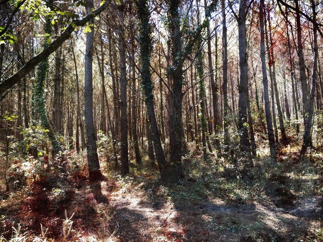 Beautiful Nature Nature_collection Naturelovers Balade Nature Landes Tronc Forest In The Forest