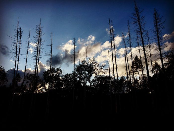 Sunset in the Forest Forest Photography Forest Trees Tree Trees Trees And Sky Sky Tree Nature Nature Photography Clouds Evening Evening Sky Bois De Versoix Versoix The Week On EyeEm