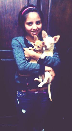 Mis Bebés <3 Ellos *U* Los Amo <3  Perritos Chihuahua
