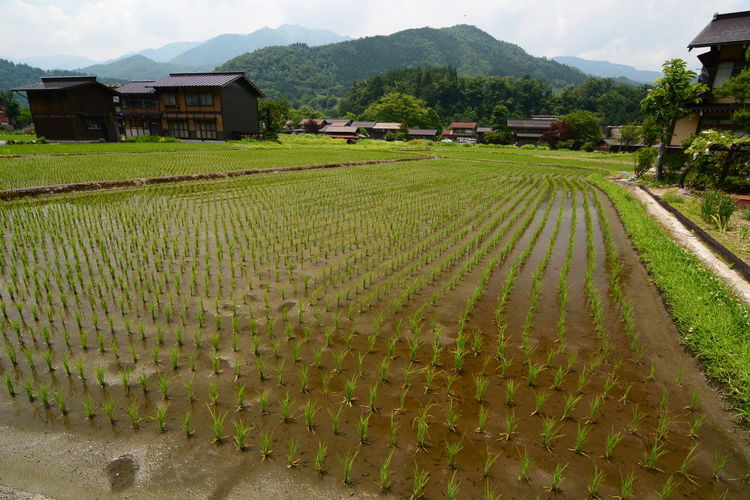 Scenic view of agricultural field by houses against mountains