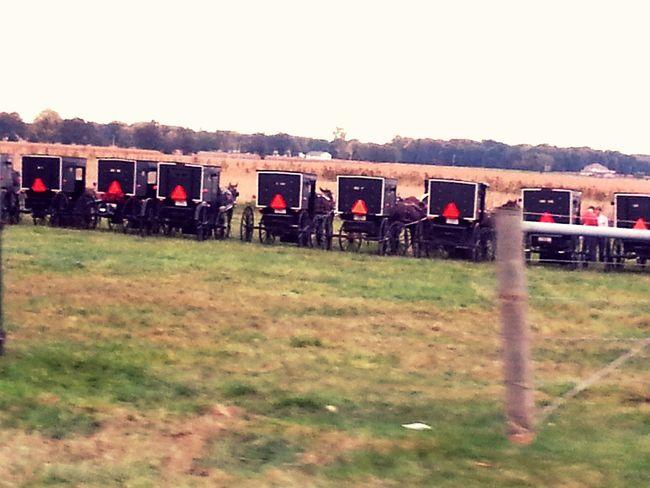 Amish Town Amish Indiana Buggy