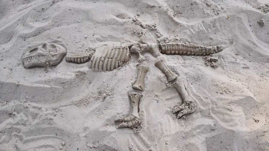 High angle view of fossil dinosaur on sand at beach