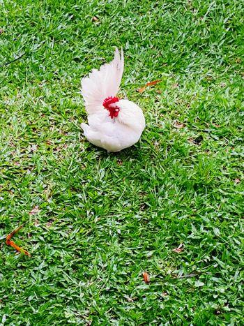 Taking Photos Hanging Out Natural AnimalsPosting Streamzoofamily Focus_on kuuuk...kuuukk...