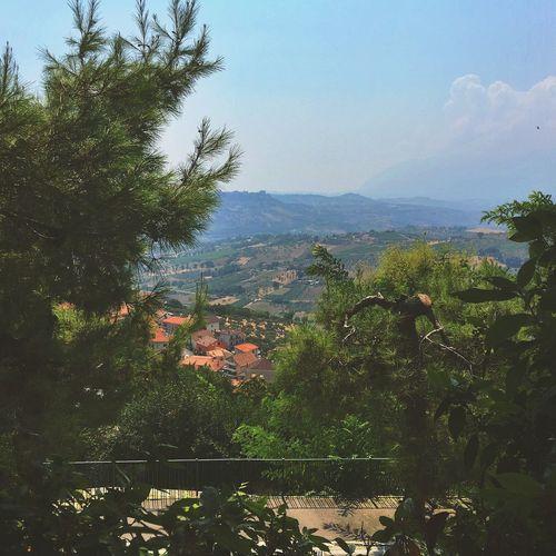 Italy Summer Nature Trees Chieti