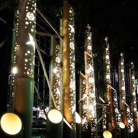 Totsuka city Bamboo light display Station Yokohama