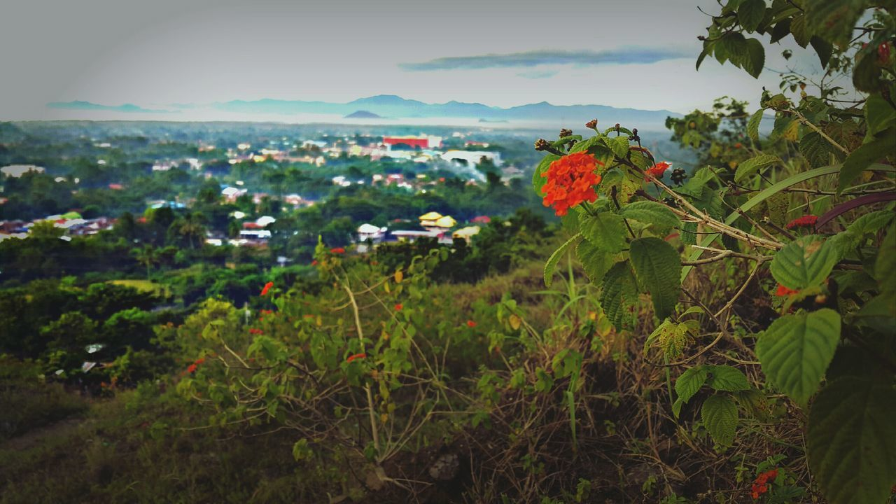 flower, growth, nature, plant, beauty in nature, leaf, no people, green color, outdoors, fragility, freshness, day, focus on foreground, field, red, scenics, blooming, flower head, mountain, foreground, landscape, sky, close-up, tree