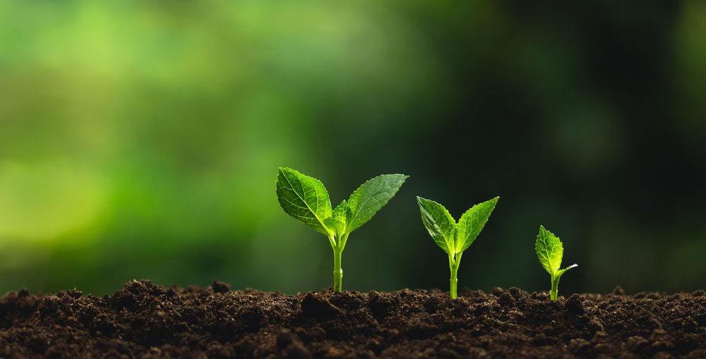 Plant a tree Natural tree Green backgroun seedlings in nature Beauty In Nature Beginnings Close-up Day Dirt Field Freshness Gardening Green Color Growth Land Leaf Mud Nature New Life No People Outdoors Plant Plant Part Plantation Planting Sapling Seedling Selective Focus Vulnerability