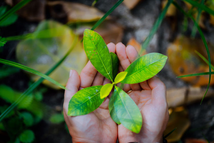 Close-up of hand holding leaf outdoors