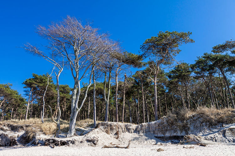 Baltic Sea coast. Baltic Sea Beach Blue Coast Day Fischland-darß-zingst Holiday Journey Landscape Nature No People Outdoors Scenics Shore Tourism Travel Tree Vacation Weststrand