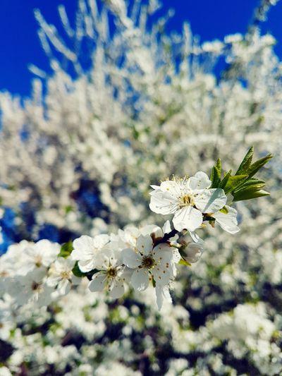 Feeling Springy 💐🤗🌼 First Eyeem Photo