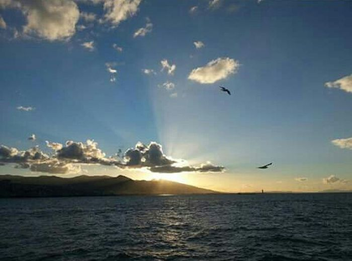 Clouds And Sky Sea Naturel Travel Photography Relax Time  Enjoy Life Sun Seagull Steamship