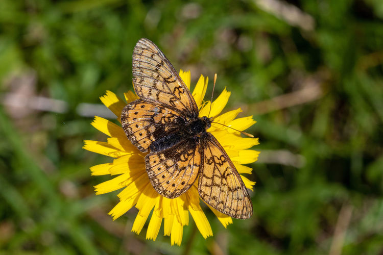 Close-up of butterfly on yellow flower