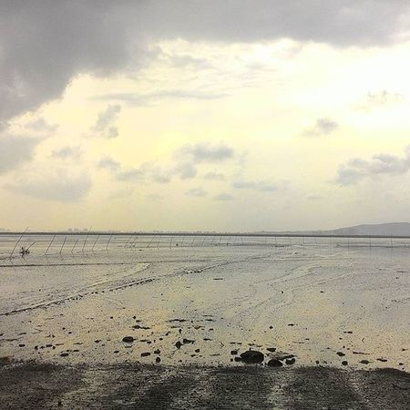 Arabian Sea Dry Vashi